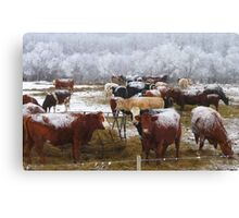 Have You Herd What I Herd? Canvas Print
