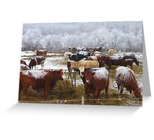 Have You Herd What I Herd? Greeting Card