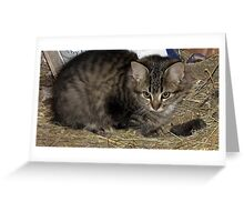 Young Barn Kitten Learns to Hunt Greeting Card