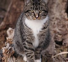Barn Cat Poses in the Tree by livinginoz