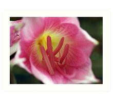 Belladonna Lily (Amaryllis Belladonna) Art Print