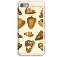 Neues systematisches Conchylien-Cabinet - 163 iPhone Case/Skin