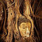 Carved Buddha Head by Elaine Short