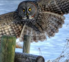 Landing Great Gray Owl and Snow Wildlife Raptor II Sticker