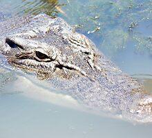 Crocodile at Yellow Waters Kakadu National Park by michelle roseman