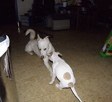 the pups got an attitude by deltadawn