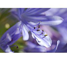 I Bean Blue Photographic Print