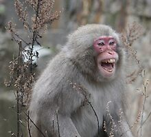 wild grin by possumgirl