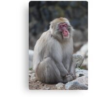 Zen monkey Canvas Print