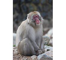 Zen monkey Photographic Print