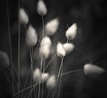 All We See  by Christine  Wilson Photography