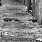 Napoli Cats by LowLightImages