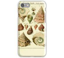 Neues systematisches Conchylien-Cabinet - 265 iPhone Case/Skin