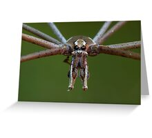 Net-casting spider Greeting Card