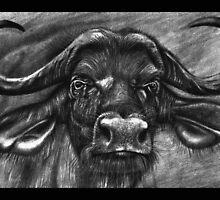 African Buffalo by emizaelmoura