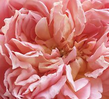 My English Roses-Jubilee Celebration by Aileen David