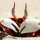 Stalk-eyed ghost crab - Ocypode ceratophthalma by Normf