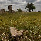 The Fallen Stone by Brendan Schoon