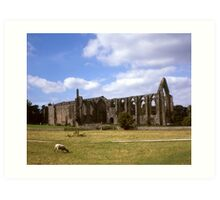 Bolton Abbey Ruins. Art Print