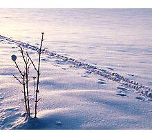 Diamonds on the Snow Photographic Print
