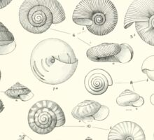 Manual of the New Zealand Mollusca by Henry Sutter 1915 0049 Spiral Shells Sticker