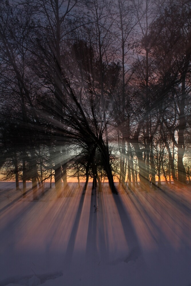 Sunset Through the Trees by Michael Stocks