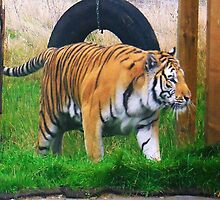 Tiger Cat Walk by Dawn B Davies-McIninch