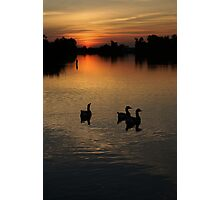 Three is a crowd  Photographic Print
