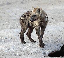 Spotted Hyena Cub, Kenya.  by Carole-Anne