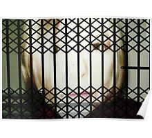 Behind Bars Poster