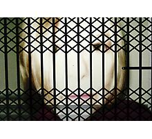 Behind Bars Photographic Print