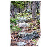 RMNP / Forest Floor Poster