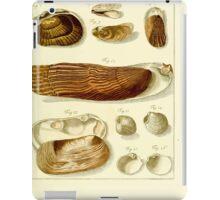 Neues systematisches Conchylien-Cabinet - 299 iPad Case/Skin