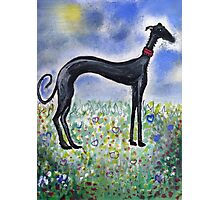 Greyhound in Field Photographic Print