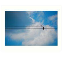 Pigeon's Wire Art Print