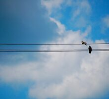 Pigeon's Wire by jaksonwithnoc