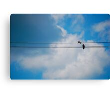 Pigeon's Wire Canvas Print