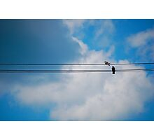 Pigeon's Wire Photographic Print