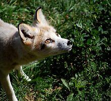 Little Fox by ElocinMuse