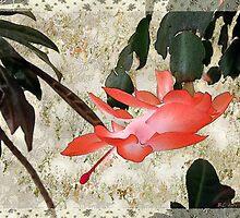 Penny Postcard Japonaise by RC deWinter