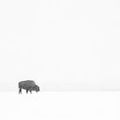 Where the Buffalo Roam by PGornell