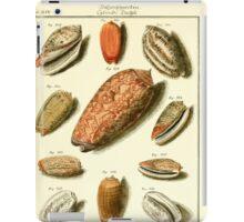 Neues systematisches Conchylien-Cabinet - 151 iPad Case/Skin