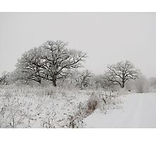 Frosted Bare Trees Photographic Print