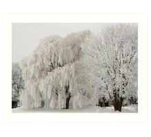 Frosted Willow And Friend Art Print