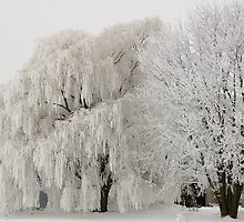 Frosted Willow And Friend by Linda Busby
