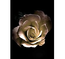 Romance of the Rose Photographic Print