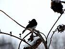 Watching Winter by Veronica Schultz