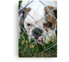 What you looking at  Canvas Print