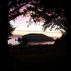 Island behind the Trees by Sheri Scherbarth