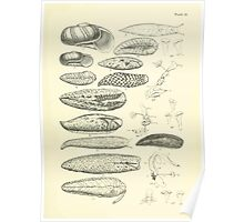 Manual of the New Zealand Mollusca by Henry Sutter 1915 0133 Delos Athoracophorus Poster